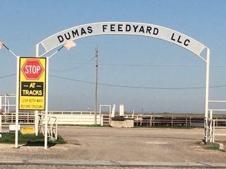 The Accident happened just in front of this feed yard.